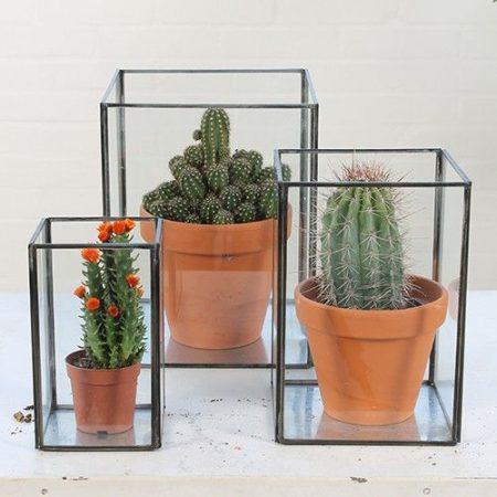 cactusplanten
